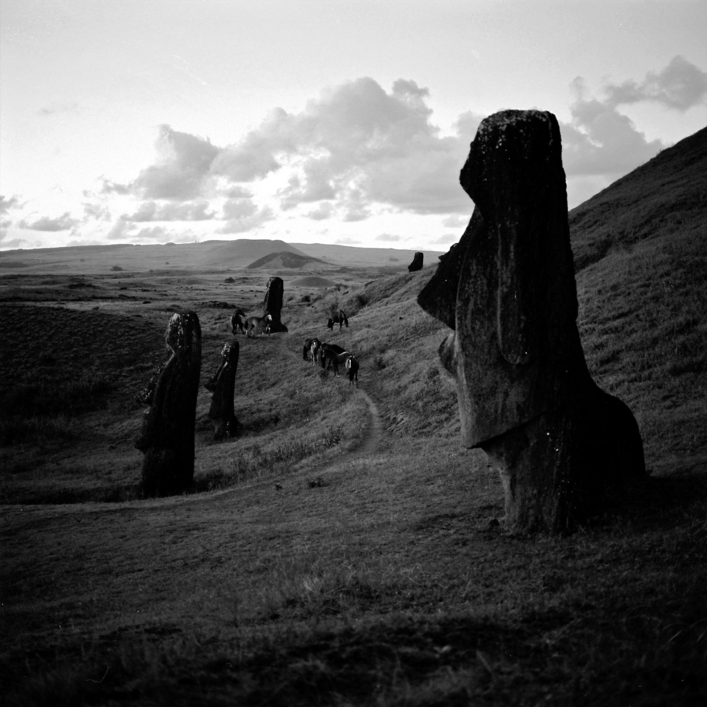 Moais and wild horses at sunset on Easter Island by Franck Socha