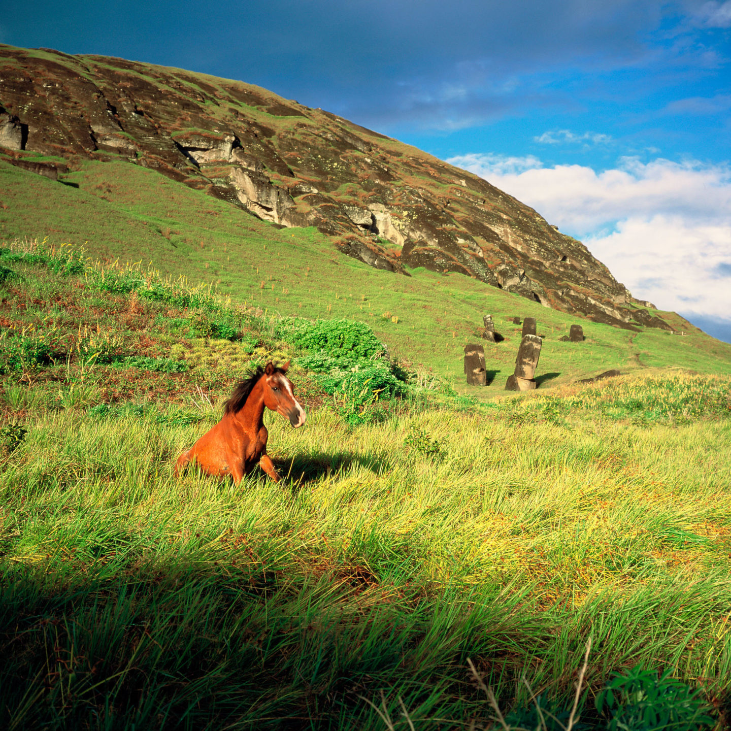 Young wild horse awaking in the Moais of Easter Island by Franck Socha