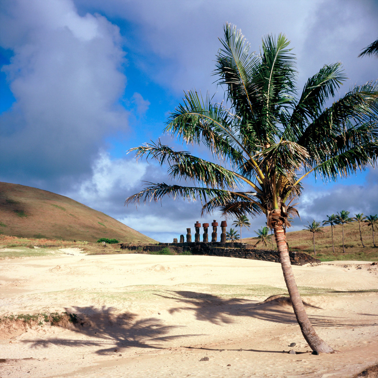Coconut tree and Moais of Anakena beach of Easter Island by Franck Socha